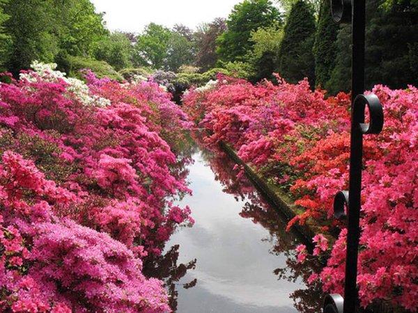 حديقة باليابان