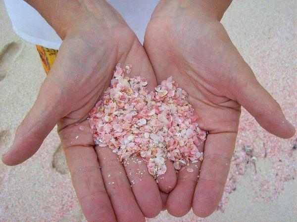 شاطئ برمودا الوردي