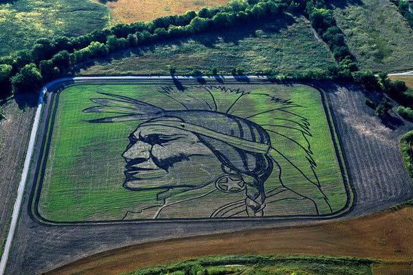 لوحات فنية بالمحاصيل