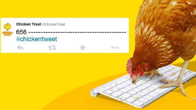 دجاجة حقيقية تكتب تغريدات مطعم أسترالي