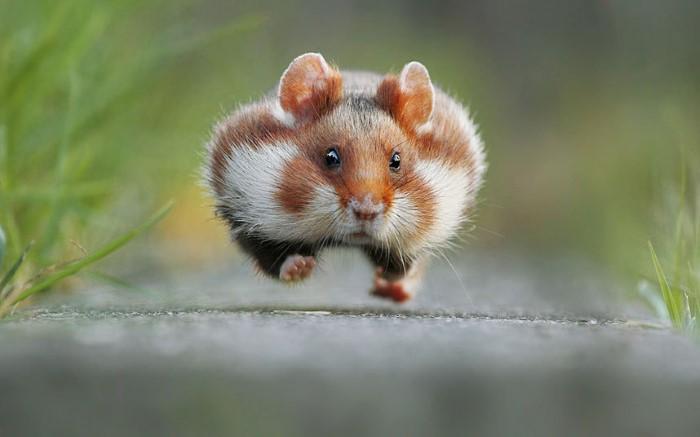 صور مضحكة للحيوانات