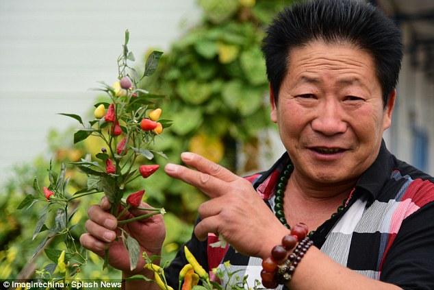 صيني يأكل 2 كيلو من الفلفل