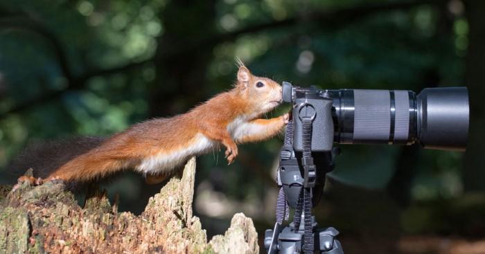 تصوير كوميدي للحيوانات