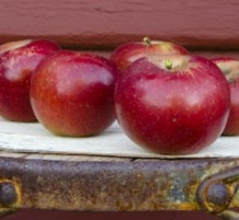 Tiny Spots on Apples