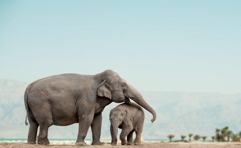 إصابة الفيل بالسرطان