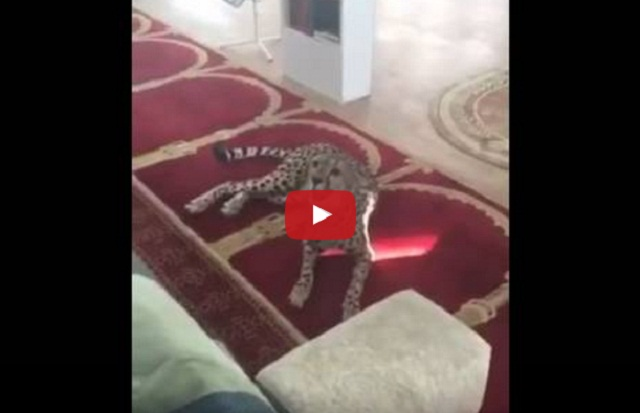 فيديو فهد بمسجد