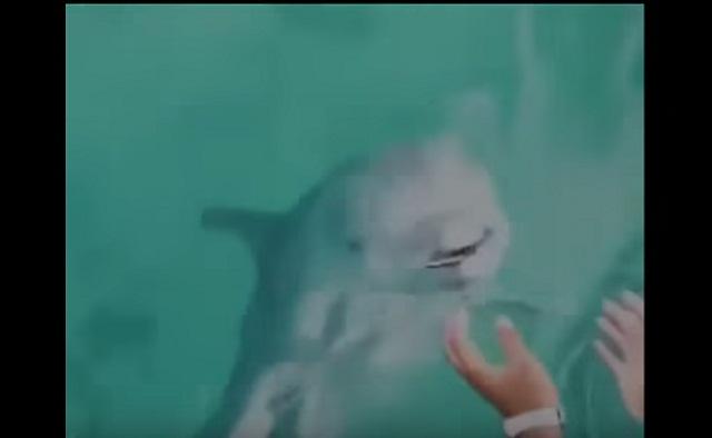 فيديو دلفين