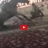 فيديو سقوط خيل