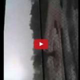 فيديو بنغالي يصرخ