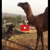فيديو معركة