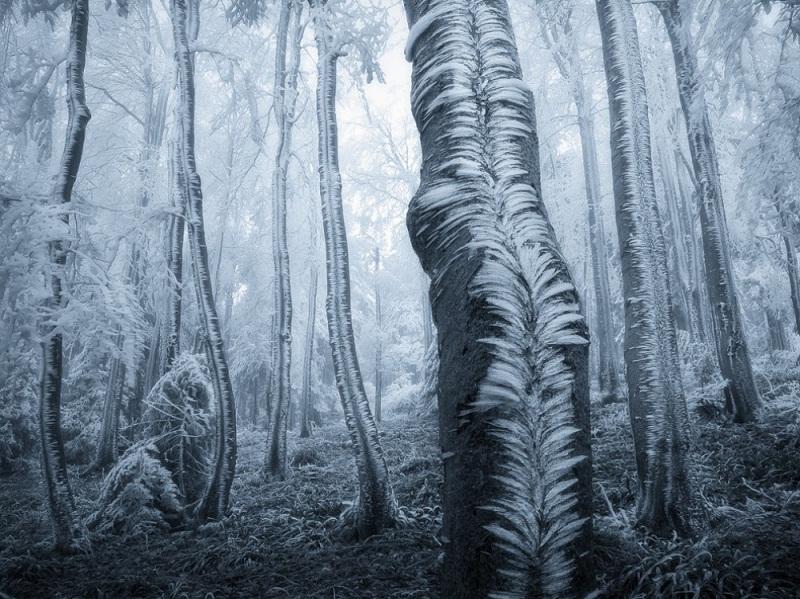 أشجار متجمدة