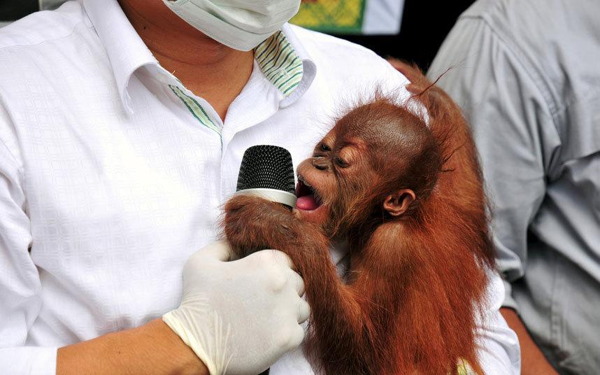 إنقاذ قرد بإندونيسيا