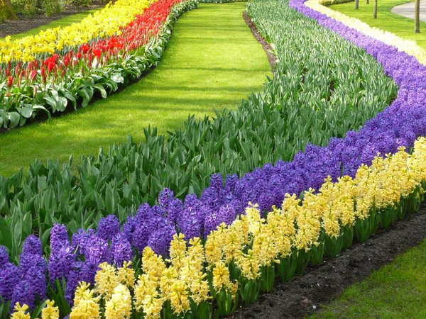 حديقة الزهور بهولندا