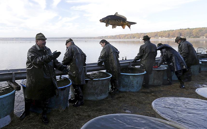 صيد سمك الكراب