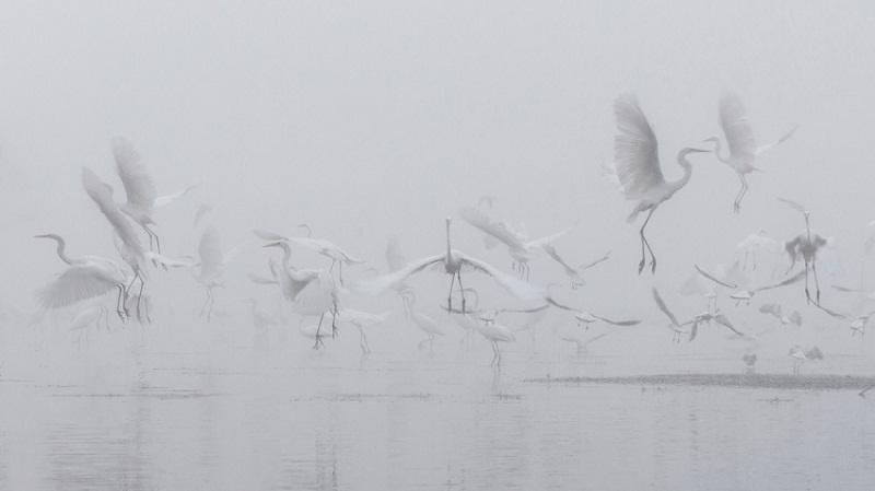 طيور اللقلاق