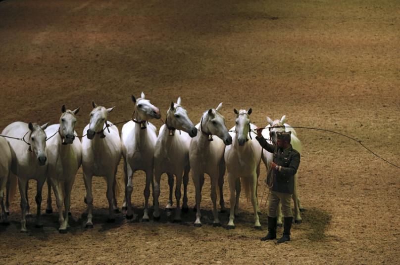 مدرب أحصنة