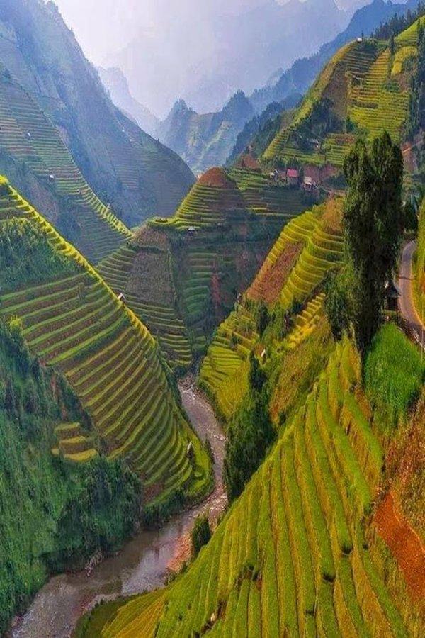 مدرجات الأرز الفيتنامية