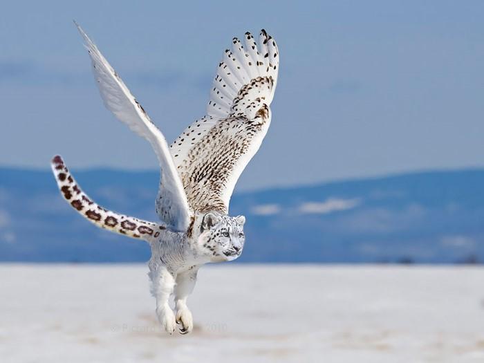 دمج صور حيوانات