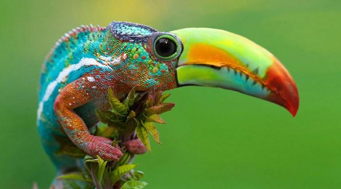 دمج صور حيوانات وطيور