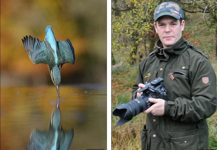 مصور طائر الرفراف