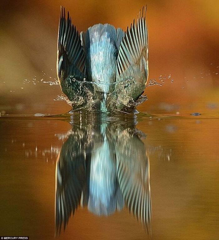 صور طائرة يغوص بالماء