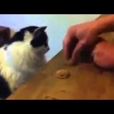 القط الذكي