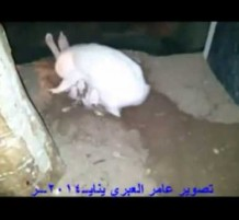 ذكاء أرنبة