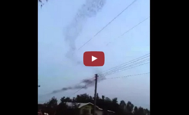 فيديو سرب خفافيش