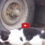 فيديو توم وجيري