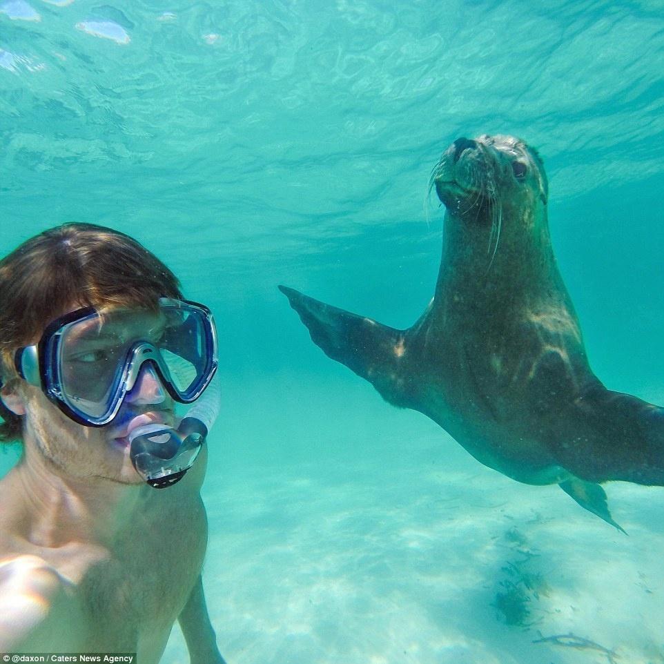 أسد البحر
