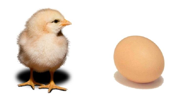 البيضة أم الدجاجة