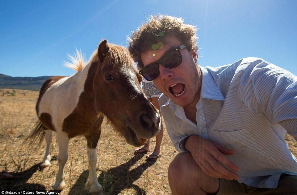 الحصان القزم