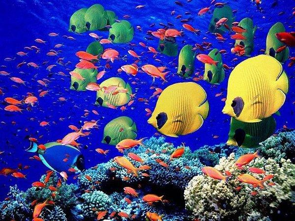 الحيد المرجاني
