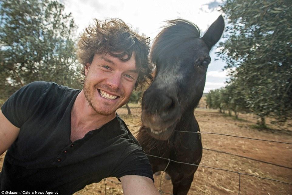 حصان أسود