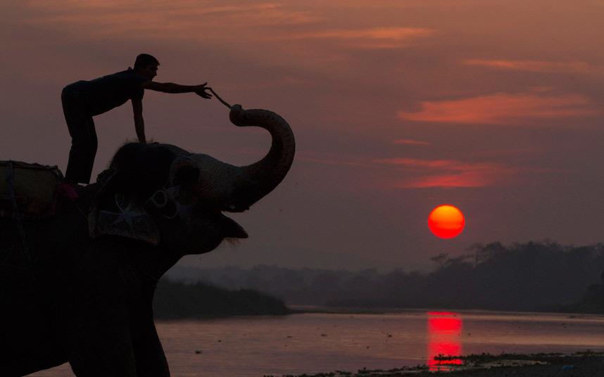 رجل يقود فيل
