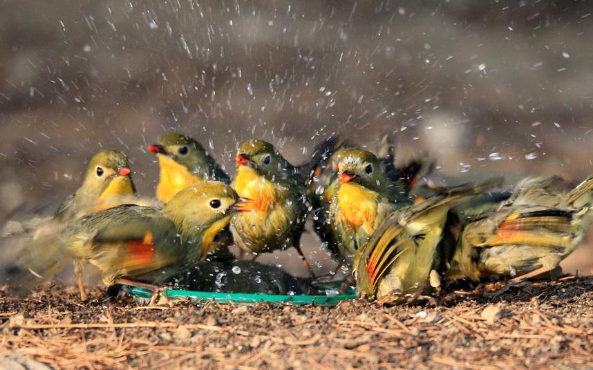 طيور تنفض ريشها
