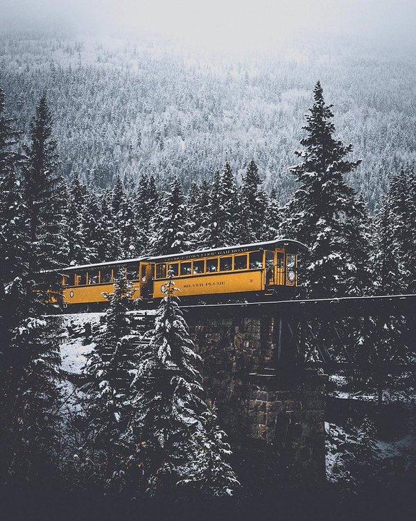 قطار وسط غابة