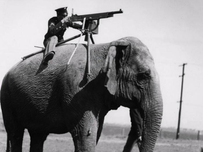 حيوانات خدمت في الجيش