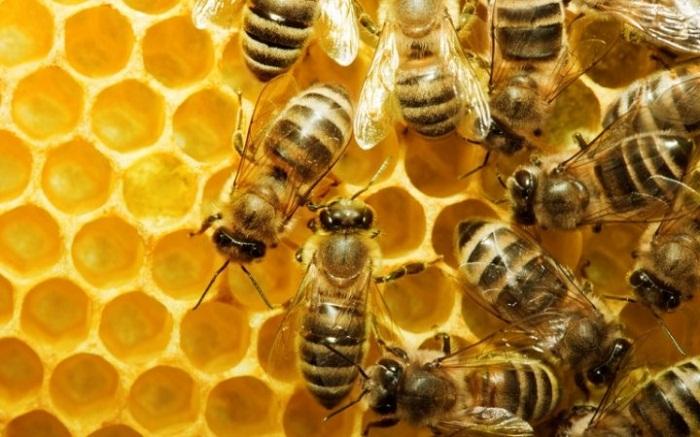 تدفئة النحل بالشتاء