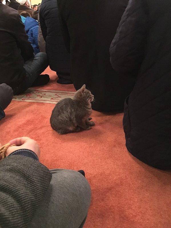 إمام مسجد وقطط
