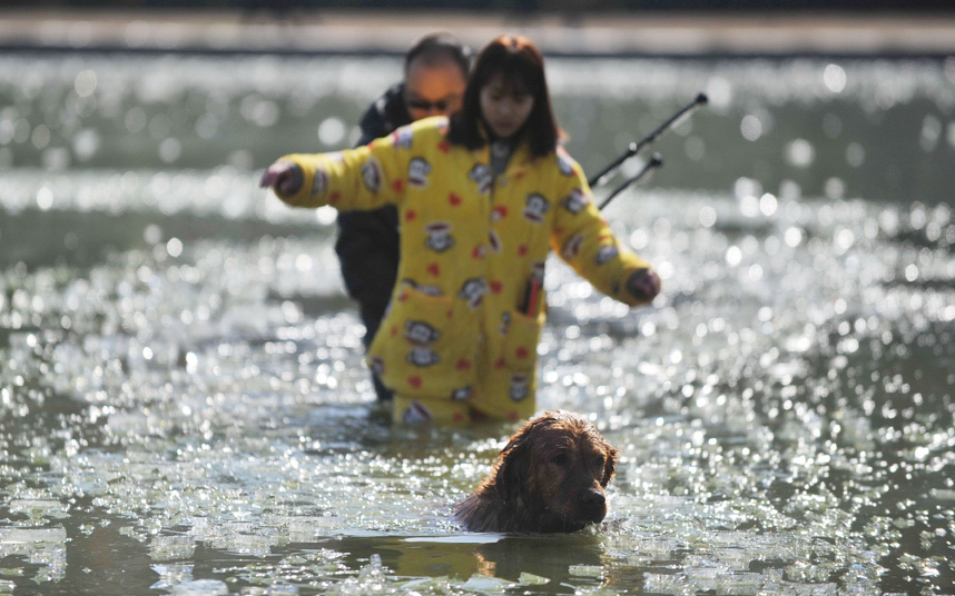 إنقاذ كلب