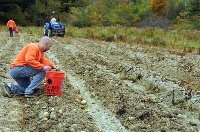 الزراعة