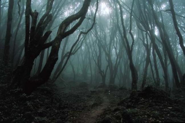 بحر الأشجار