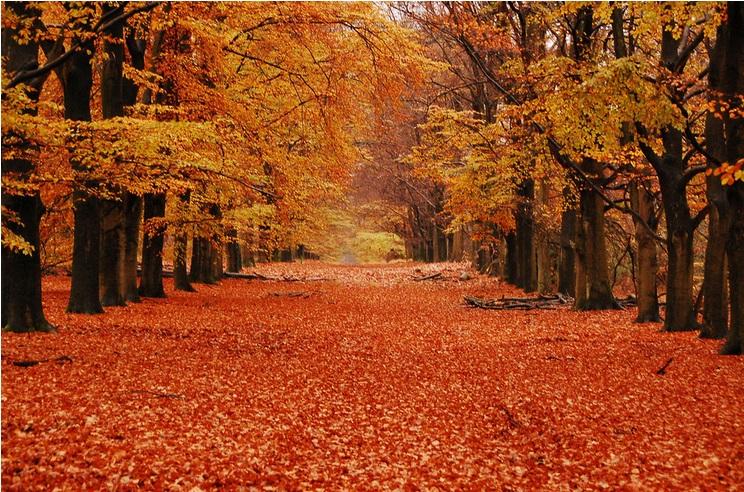 جمال الخريف