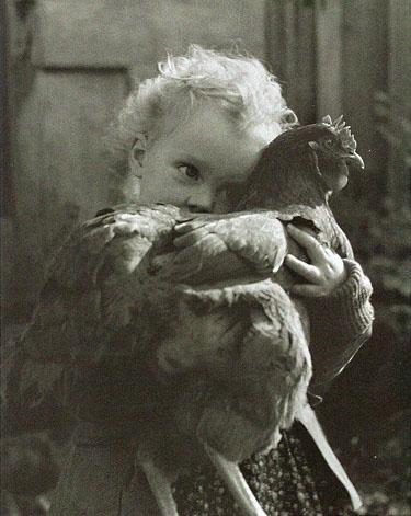 دجاجة