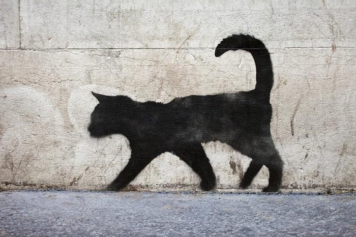 رسمة قط أسود
