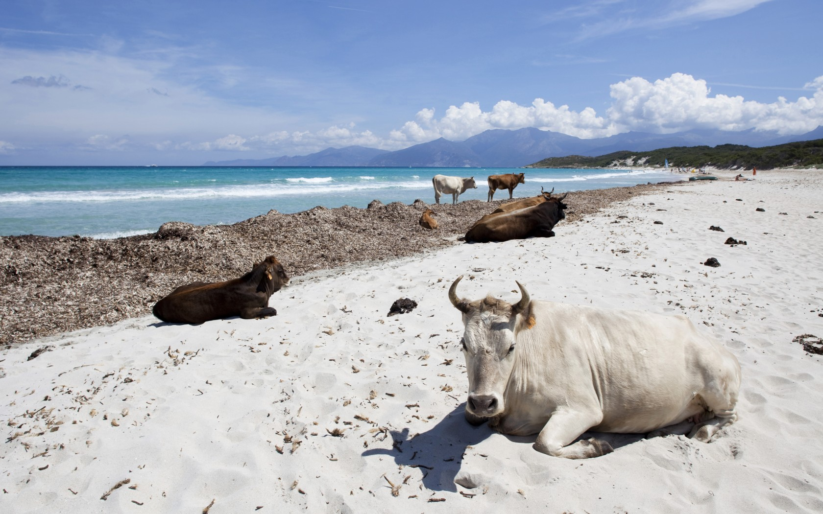 شاطئ ساليتشا