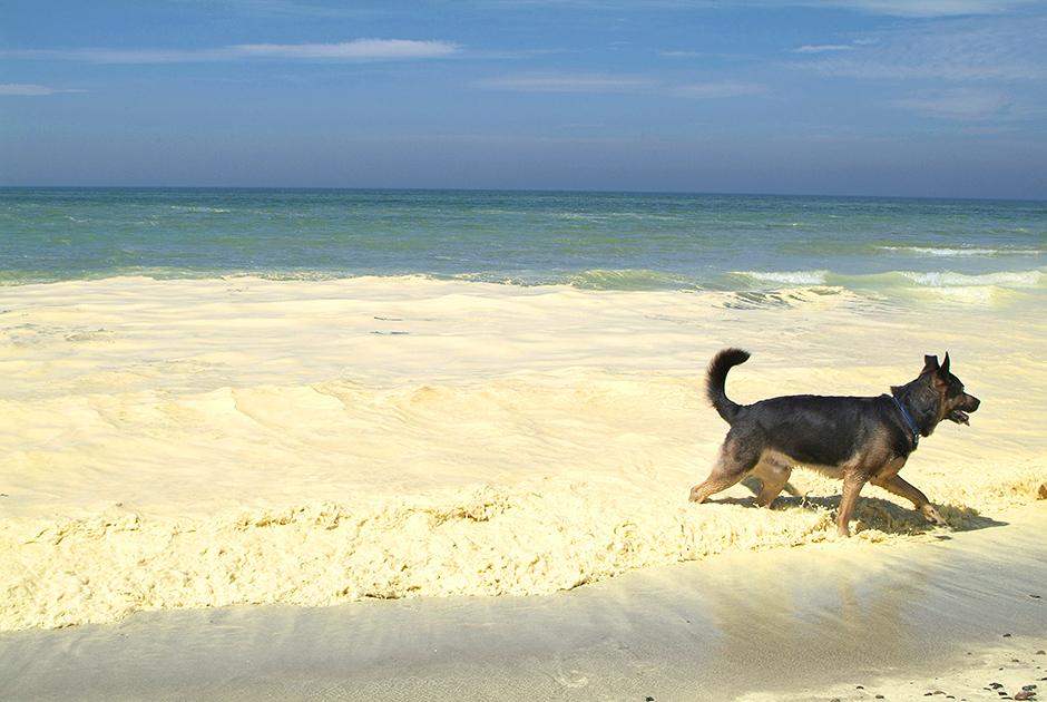 شاطئ كاليننجراد