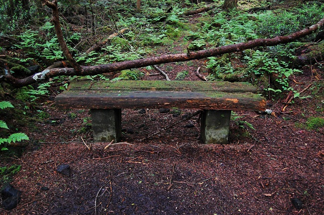 غابة الانتحار