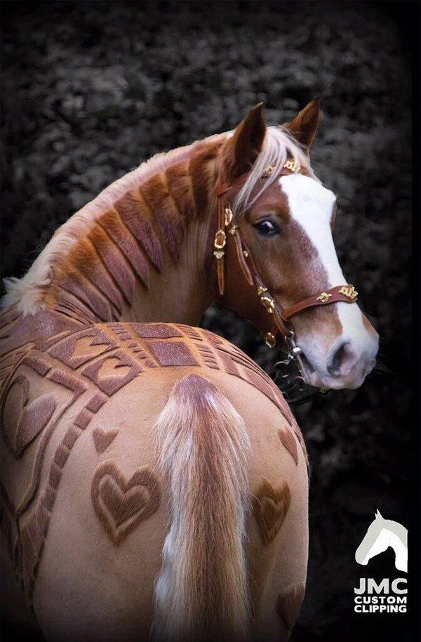 قصات شعر للخيول
